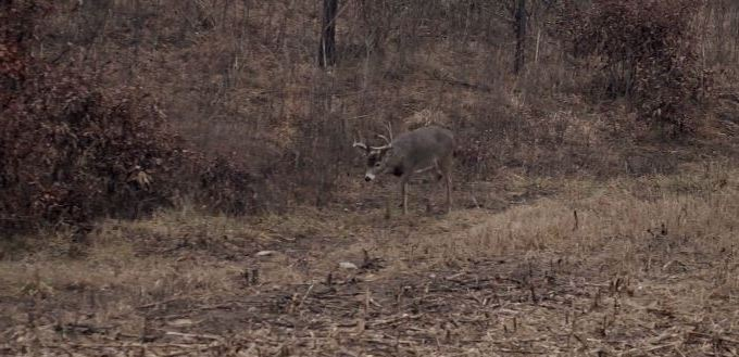 What's the Best Buck to Doe Ratio?