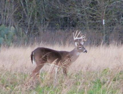 Deer need cover