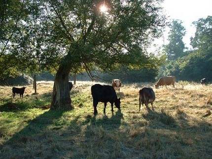 Proper Grazing for Deer and Other Wildlife