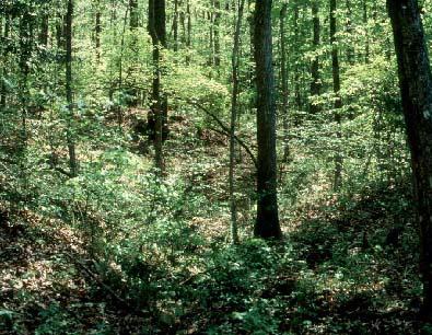 Vegetation Management - Deer Cover Requirements