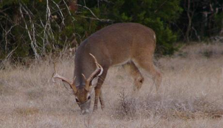 Proper Harvest Essential for Good Deer Management