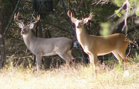 Deer Management: What a Difference a Year Makes