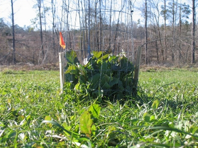 How Much to Plant in Food Plots?