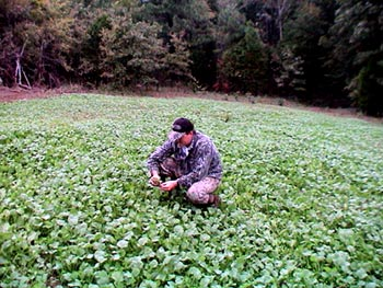 Food Plots Without Planting