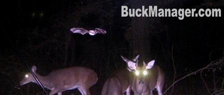 Strange Wildlife Camera Photos
