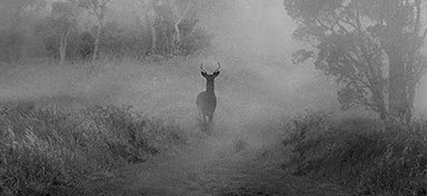 Tips for Hunting Late Season Bucks