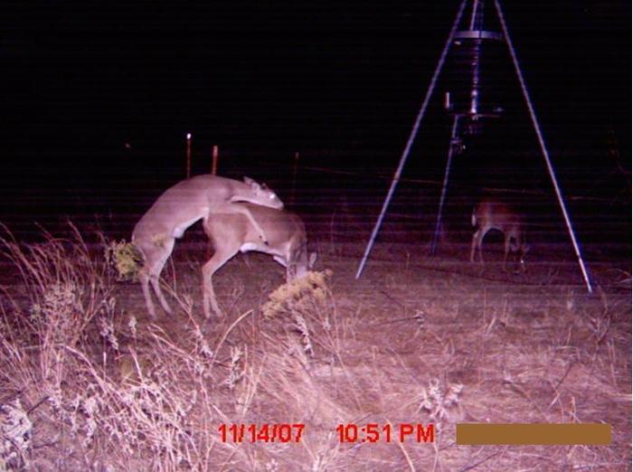 Neat Game Camera Photos Deer Management At Buck Manager