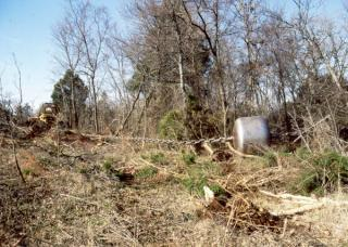 Chaining for Brush and Deer Management