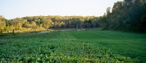 Five Important Food Plot Tips and Considerations for Wildlife