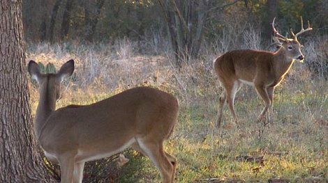 Deer Movement: Timing and Patterns During Hunting Season