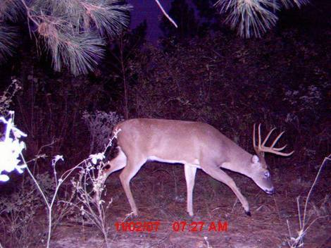 Game camera tips to get your buck!