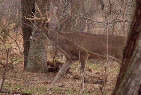 Game Camera Tips for Deer Hunters