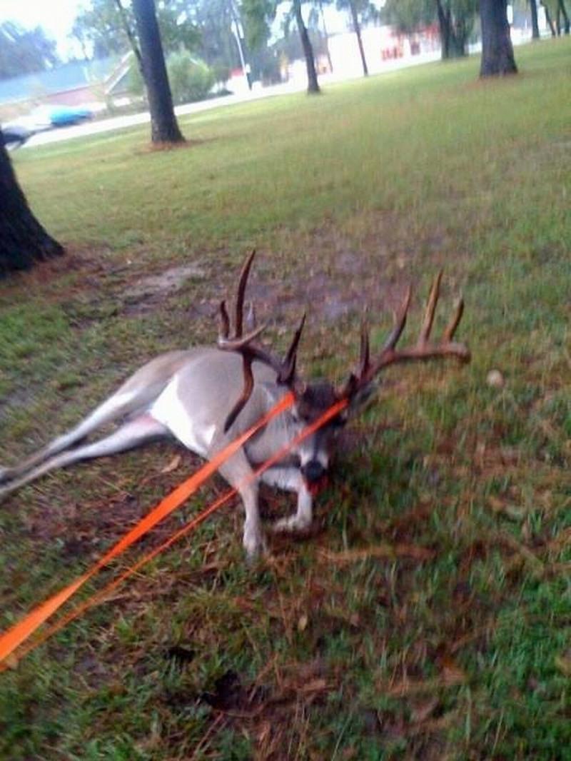 Monster Deer Hit by Car