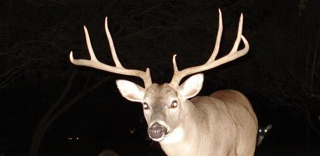 Comment on Texas' proposed hunting regulations