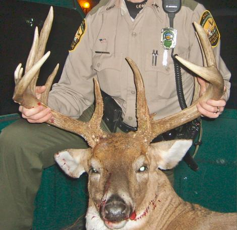 A big buck that was illegally harvested in Ohio