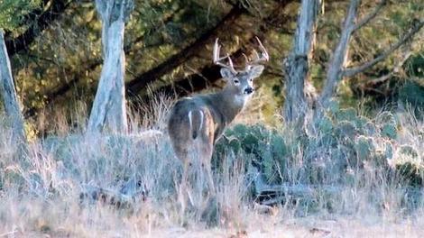 Small Acreage Deer Management