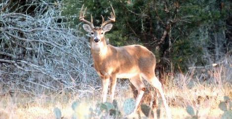 Small Acreage Deer Management