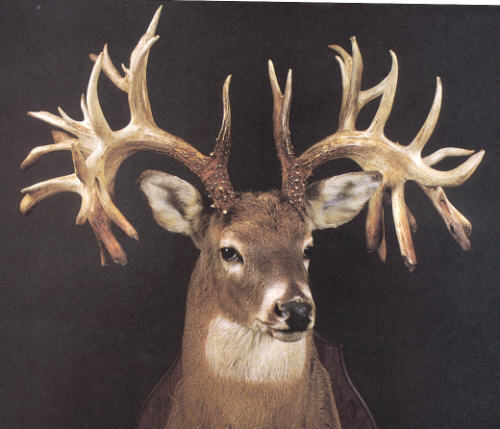 Non Typical Bucks Deer http://www.buckmanager.com/2007/10/17/missouri-monarch-the-world-record-non-typical-whitetail-buck/
