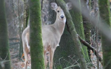 Deer Management at Buck Manager: New hunting laws possible in Texas