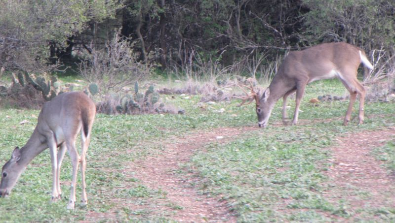 Deer Hunting gets better as the rut continues