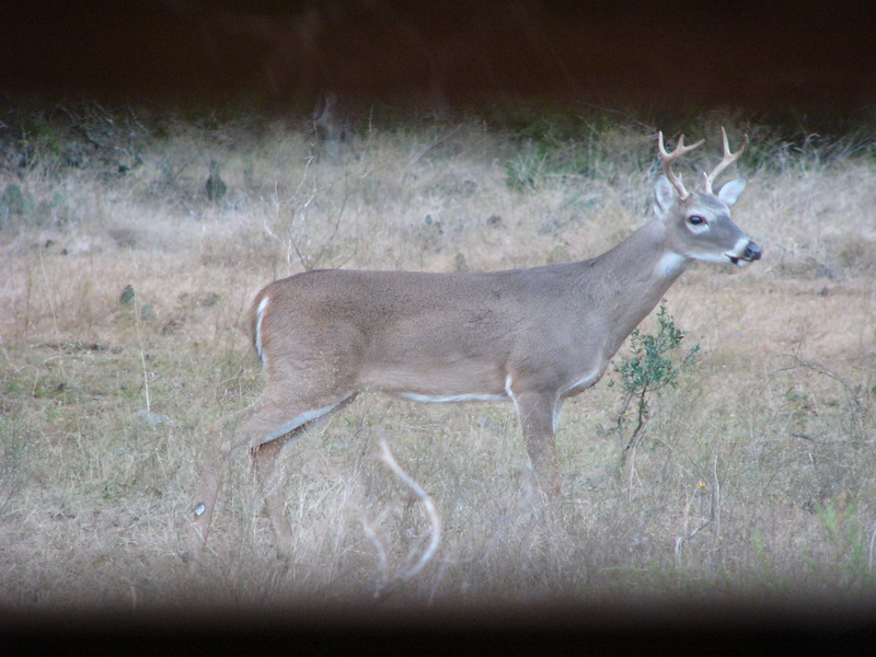 Deer Management: Stands Counts to Survey Deer