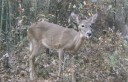 Deer Management: Lumpy Jaw in Whitetail