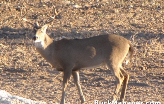 Managing Deer Through Movements