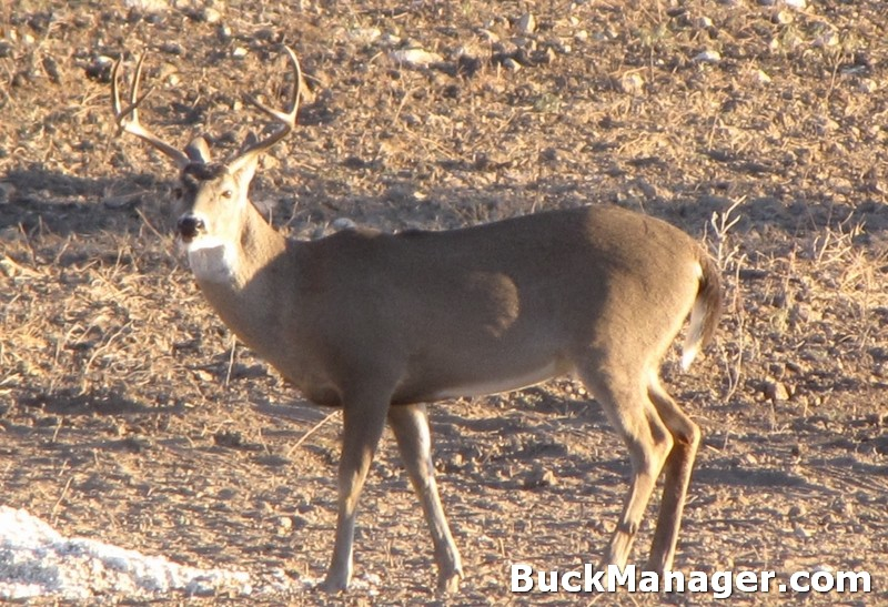 Managing Deer Through Movements