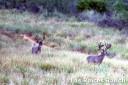 New Texas Non-Typical Whitetail Buck - 311 4/8