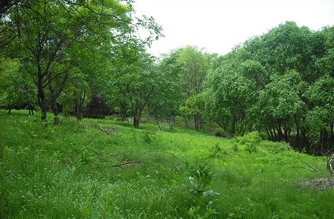 Improve Deer Habitat: Create Forest Openings
