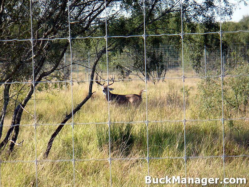 Whitetail Deer Management: Home Range of Whitetail Deer