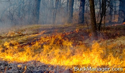 Deer Habitat Improvement: Prescribed Burning for Wildlife