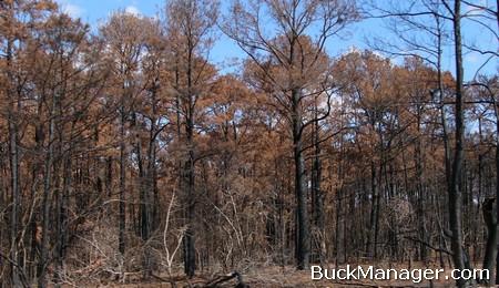 Whitetail Deer Management - Habitat Management Techniques Post Wildfire