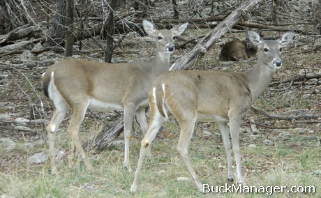 Deer Hunting: Doe Hunting and Management Tips