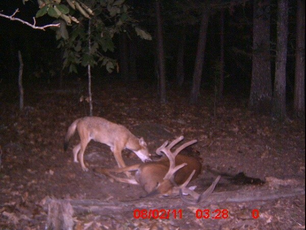 Can You Hunt Deer From The Car In Wisconsin