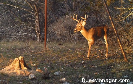 Deer Hunting and Management in Texas