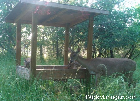 Rice Bran for Whitetail Deer Hunting, Attracting Deer to