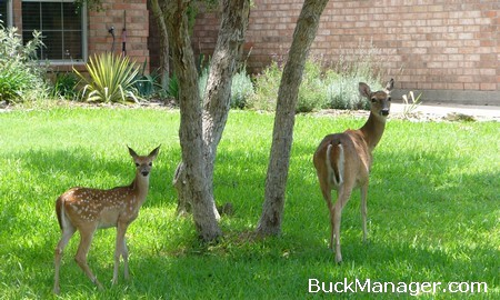 Deer Population Control and Management in Urban Areas