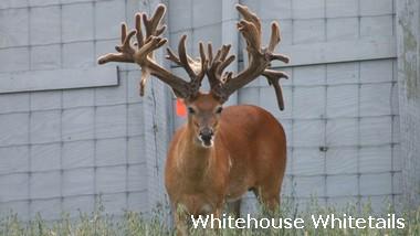 Deer Breeding & Hunting Debated in the News | Deer Management at Buck