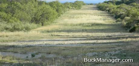 Deer Management: More Edge for Better Habitat