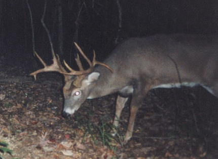 Big Buck Caught on Game Camera