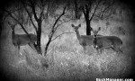Principles of Doe Harvest for Deer Hunting and Population Management