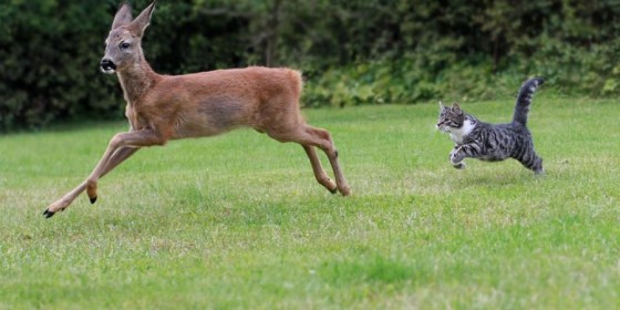 Parasites in White-tailed Deer: Disease Spread by Feral Cats