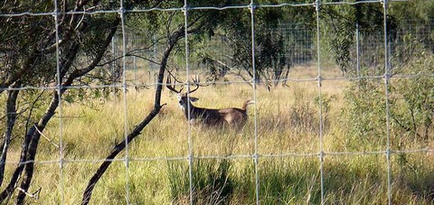 High Fence Deer Management Managing Whitetail Amp Habitat