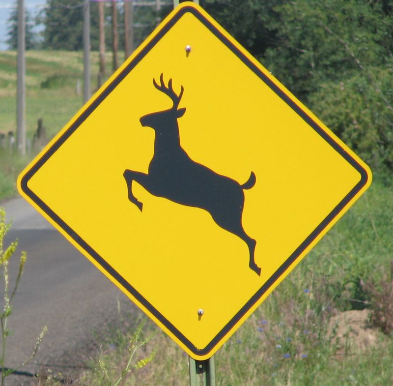 Deer Hunting: Watch Out for Deer-Auto Accidents