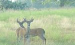 Deer Hunting Success: Pre-Season Planning