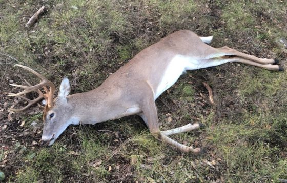 Whitetail Hunting in Texas
