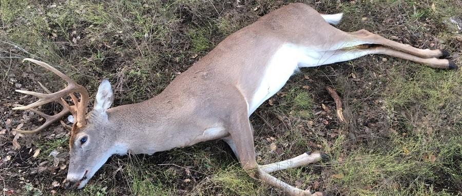 Proper Deer Harvest Rate?