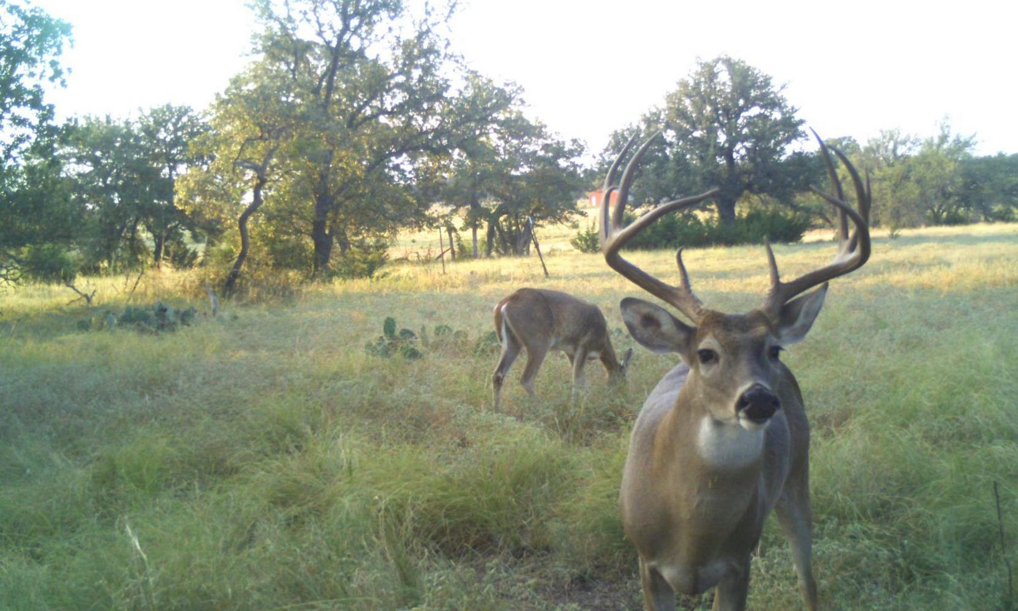 Deer Management at Buck Manager