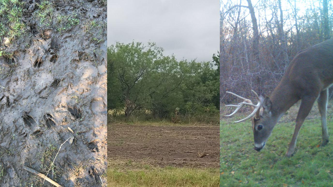 Pre-Season Deer Hunting Prep